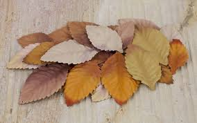 Hay colored mulberry leaves